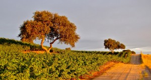 Back Roads of Paso Robles Wine Country