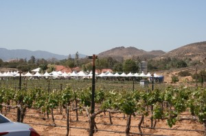 Sierra Pelona Valley Wine Festival at Reyes Winery