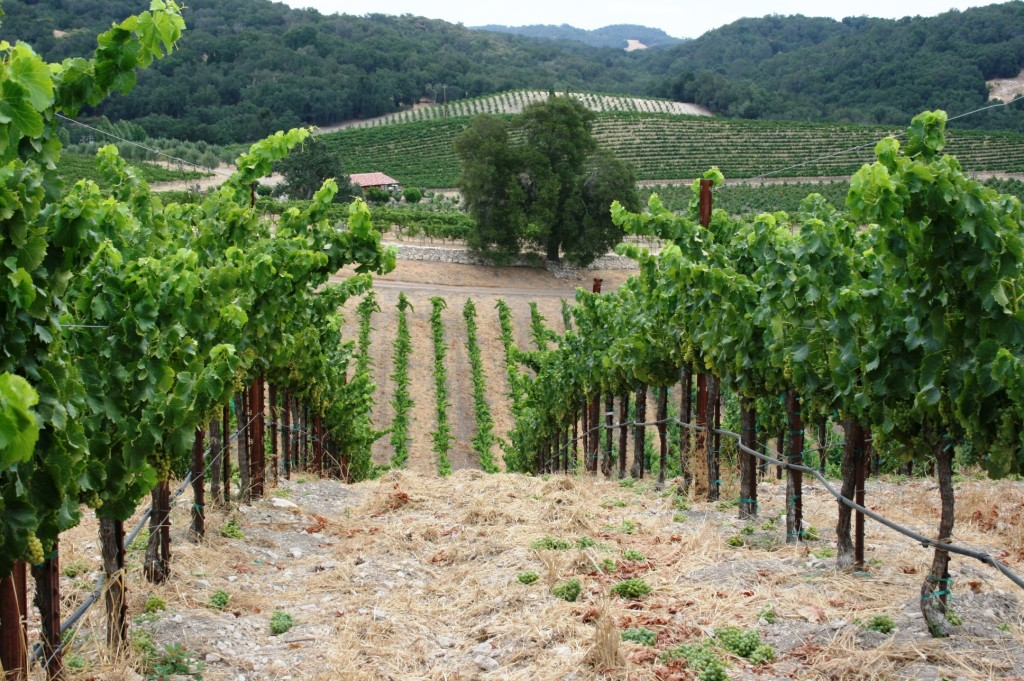 Tablas Creek vineyard, Adelaida Road, Paso Robles, California