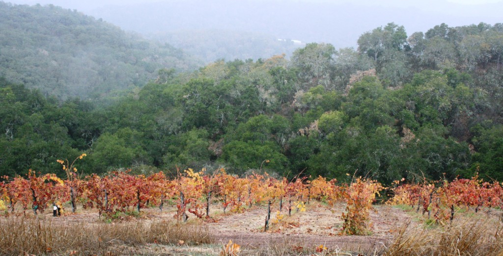 Alta Colina Vineyard, Adelaida Road, Paso jRobles, California