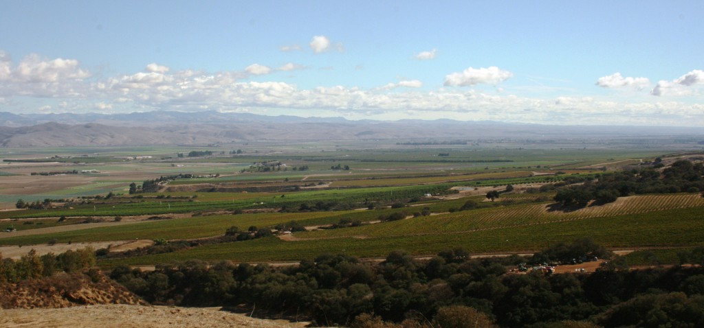 vineyard view from Hahn Family Wines